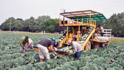Nueva interpretación de ley de salario mínimo afectando algunos campesinos