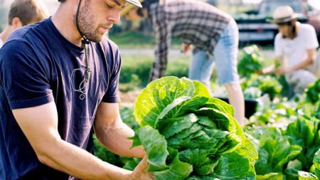 Escuelas de Michigan con Alimentos Cultivados Localmente
