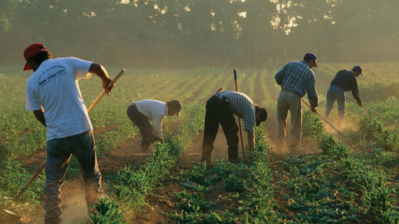 """""""Guerra"""" contra inmigrantes puede generar escasez de mano de obra en USA"""