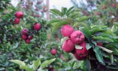 Trabajadores de manzana demandan por falta de pago