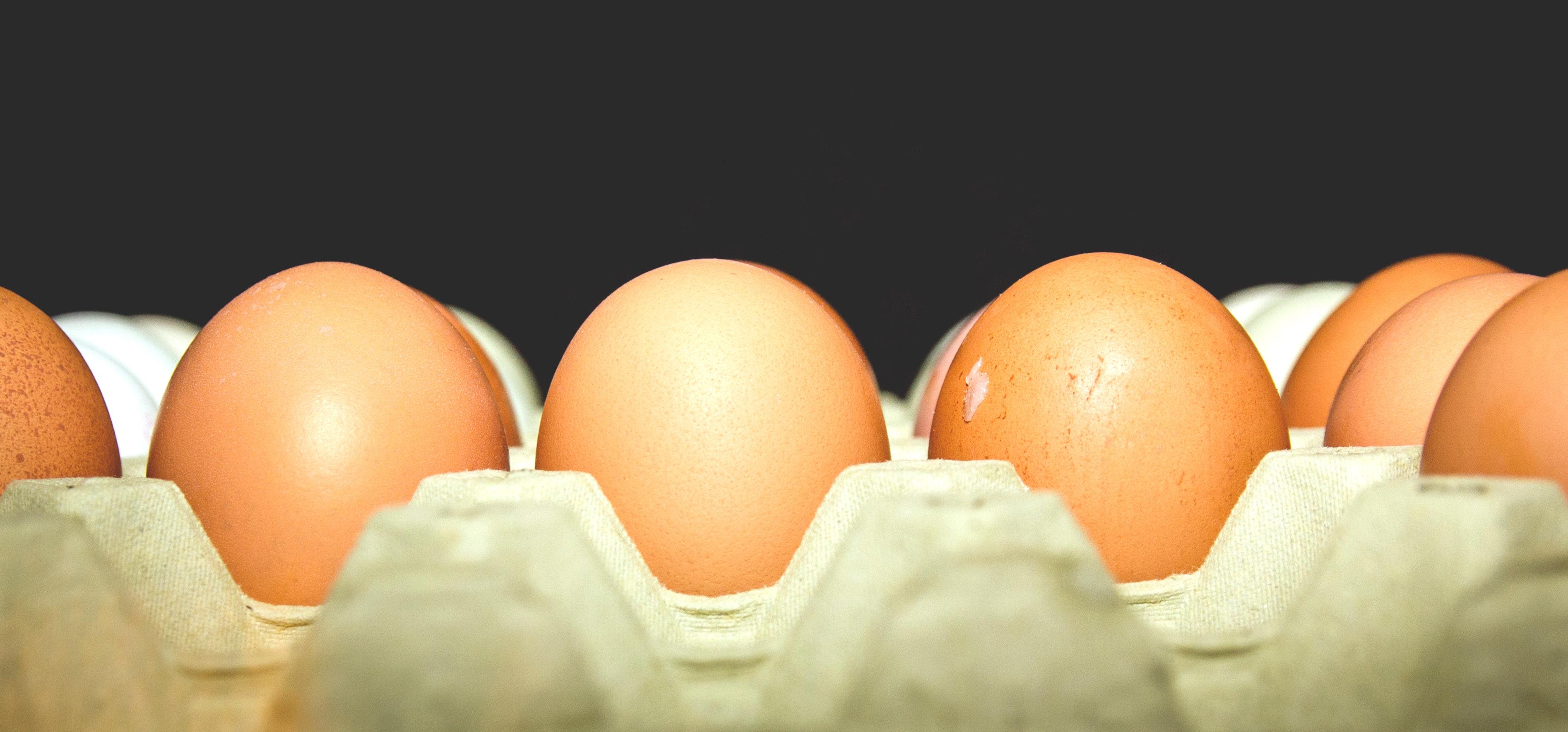 Brote de salmonela en huevos