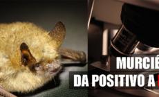 Murciélagos da positivo a rabia en GR