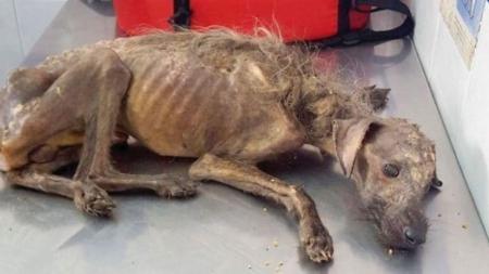 INCREÍBLE TRANSFORMACIÓN, Perrito apunto de morir de hambre y dolor es rescatado [FOTOS]