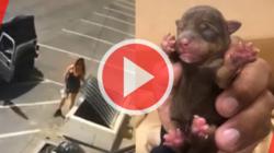 Mujer tira 7 cachorritos a la basura sin piedad