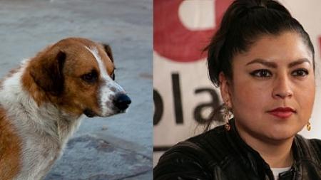 Diputada propone estrategia para eliminar todos los perros callejeros en México, afirma que son una molestia.