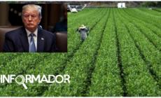 Critican cambios propuestos por Trump para visas de trabajadores agrícolas