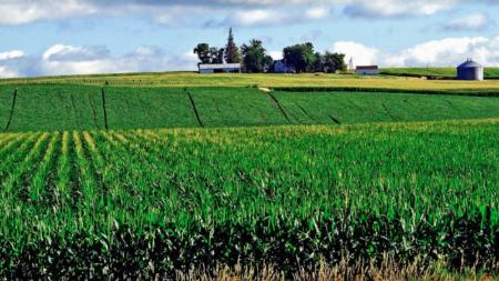 Extienden fecha límite para reportar cultivos de primavera