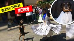 Galán canino en el festival de Oaxaca