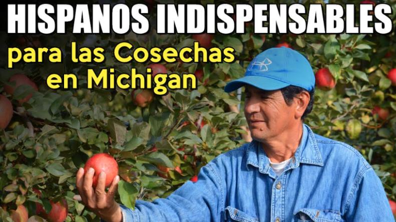 Hispanos indispensables para las cosechas en Michigan