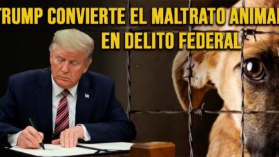 Donald Trump convierte la tortura animal en delito federal