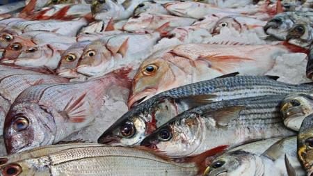 Nuevas reglas de pesca podrían afectar a los comercios