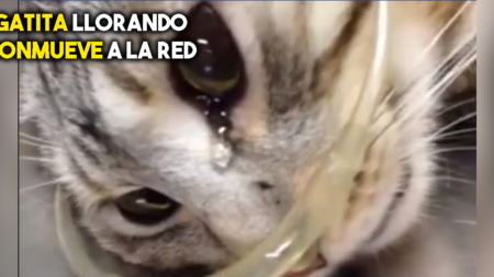 VÍDEO: Gatita llora cuando recibe atención médica después de una golpiza