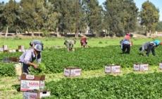 Sanción millonaria a empresa que abusaba de campesinos debe alentar denuncias