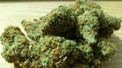 Se aceptan solicitudes para instalaciones de marihuana medicinal en Kalamazoo