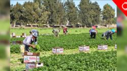 Campesinos indocumentados: listos para luchar por la legalización en Senado