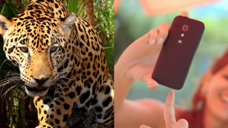 Por una 'selfie' termina con el brazo destrozado por un jaguar