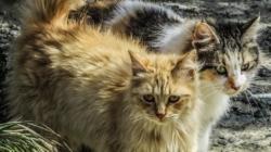 Bomberos rescatan a gatos abandonados en la carretera
