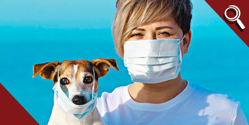 Esto es lo que debes saber sobre tus mascotas y el coronavirus