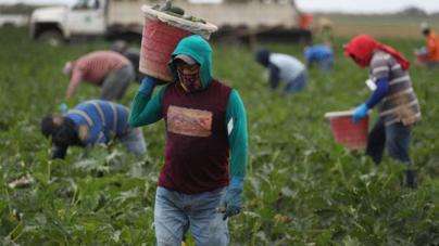 ¡Los trabajadores agrícolas que mantienen las tiendas de abarrotes abastecidas tienen un alto riesgo de contraer coronavirus!