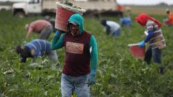 Indocumentados quedan fuera del estímulo económico siendo la fuerza y eje del país