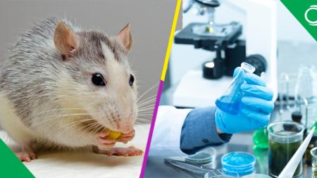 Prueban con éxito en animales vacuna contra el coronavirus